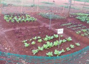 Thầy và trò trường TH Phan Chu Trinh ,trồng được vườn rau sạch. Đây cũng là hoạt động trải nghiệm giúp các em biết trồng rau và quí trọng lao động!